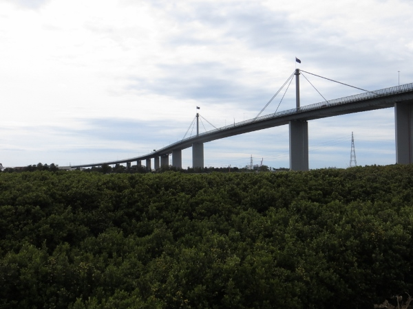 mangroves and Westgate Bridge