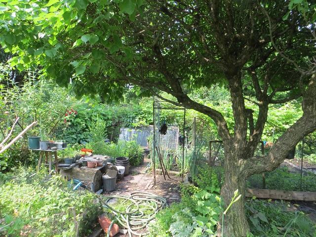 Fenway Victory Garden
