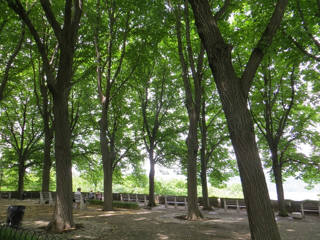 Tree canopy at Fort Tryon