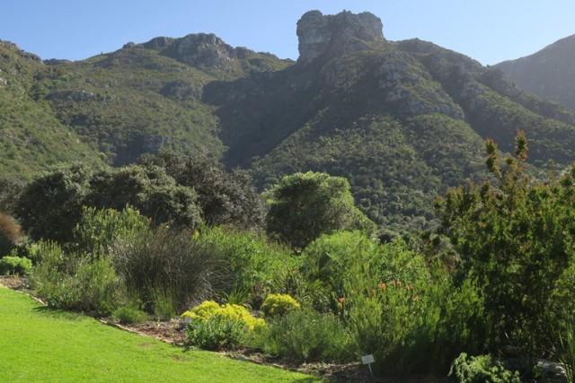 Kirstenbosch 2