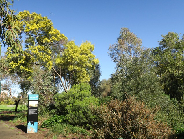 wattle & season interpretation